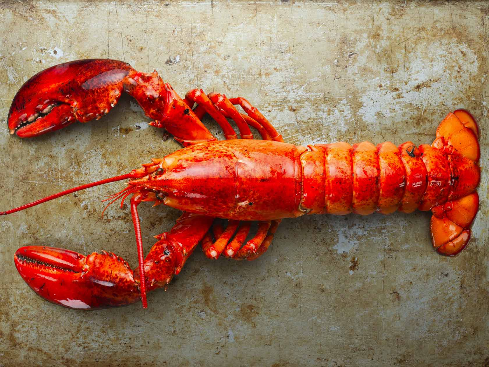 How do lobsters grow?